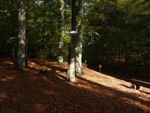 Buchenwald der Granitz