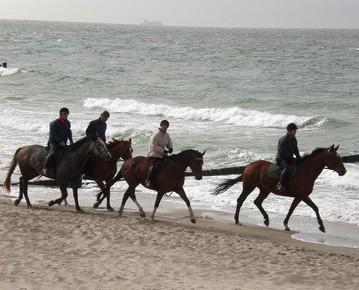 pferde-am-strand