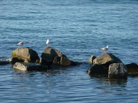 Möwen in der Ostsee in Sellin