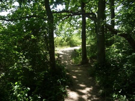 Waldweg Seedorf