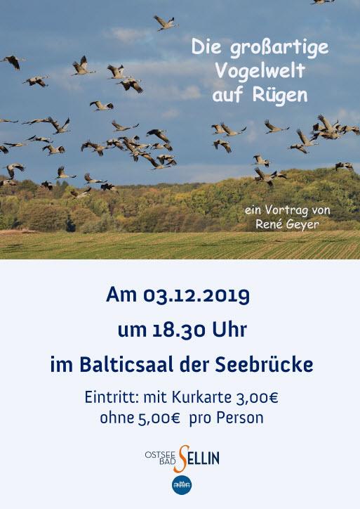 Vogelwelt auf Rügen