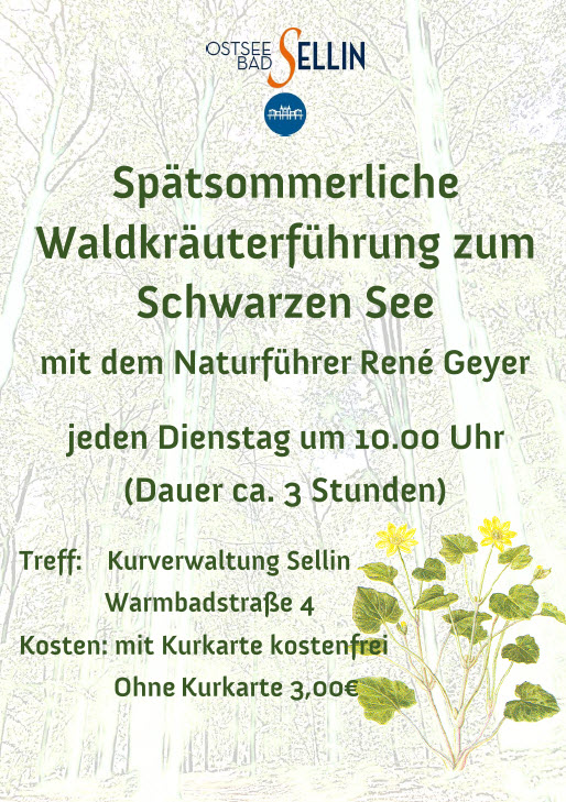 Waldkräuterführung September 19